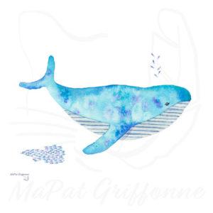 Baleine turquoise